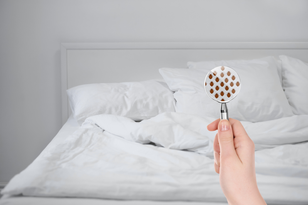 Bed Bugs Biting? Get Fast Bed Bug Cleanup in Lincoln Acres