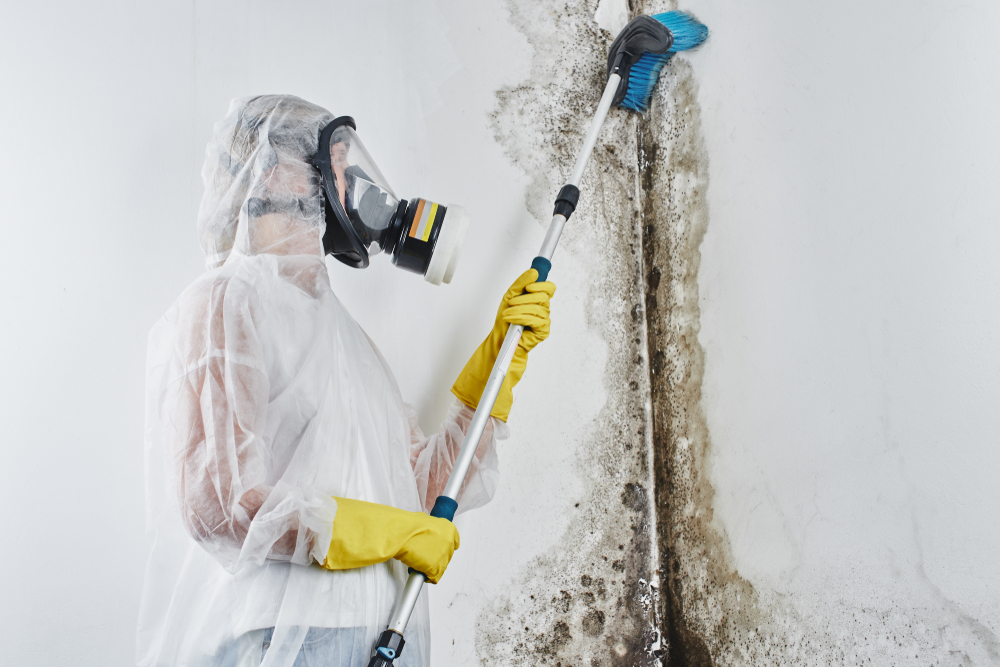 Home Mold Removal in Casa de Oro-Mount Helix Requires Professional Help