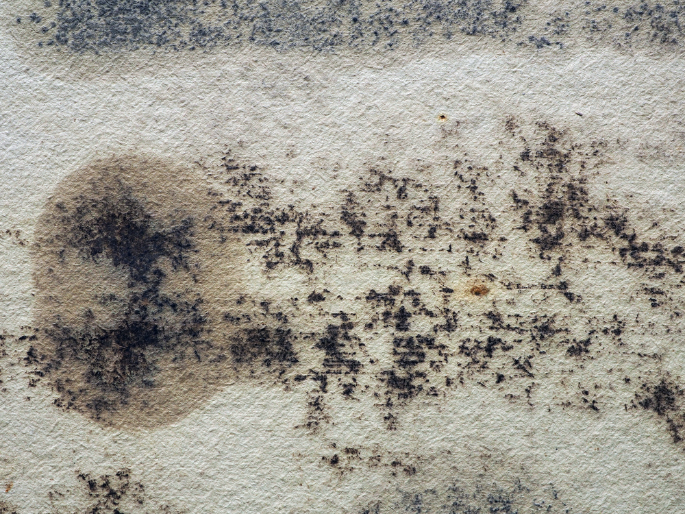 Is Mold Damaging Your Health in Your Descanso Home?